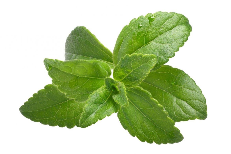 feuille de stevia édulcorantes