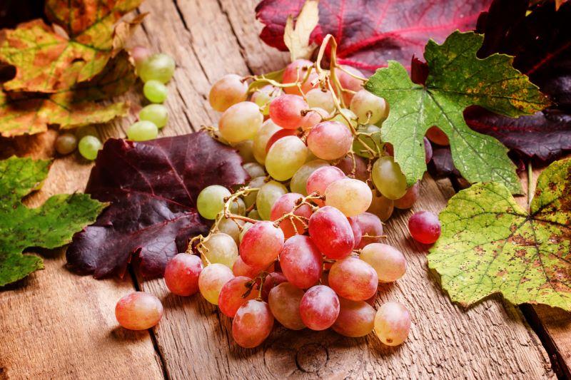 Raisins et feuilles d'automne