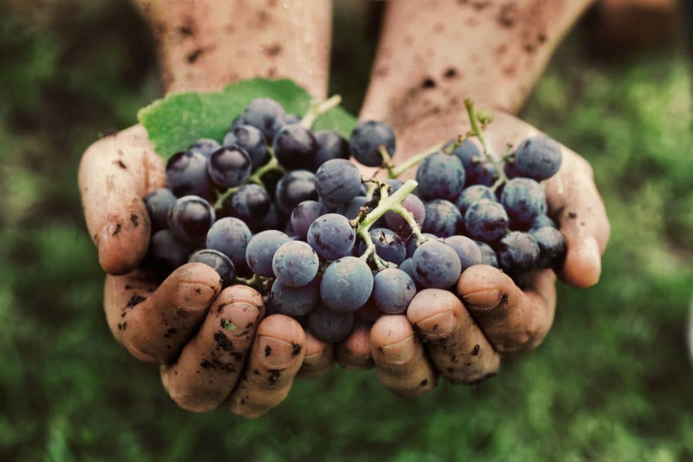 Raisins frais noirs